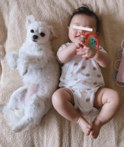赤ちゃんと犬の生活